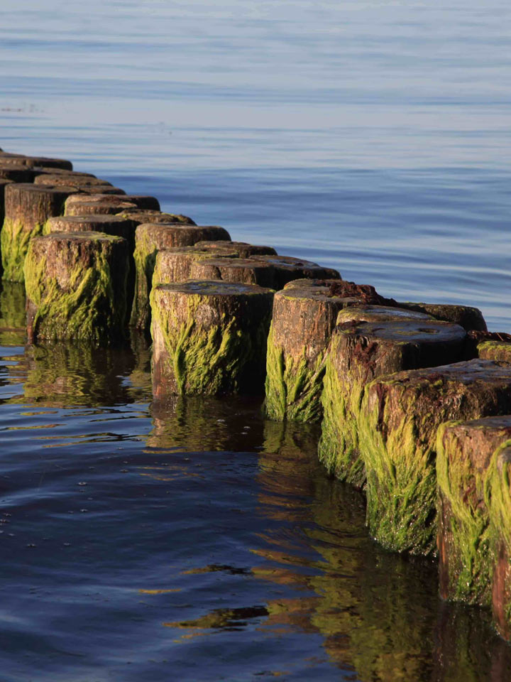 Wasser Meer Rügen